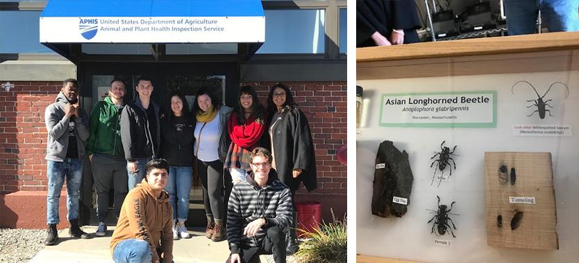 Asian Longhorn Beetle Tour with Professor Soracco's Environmental Science Class