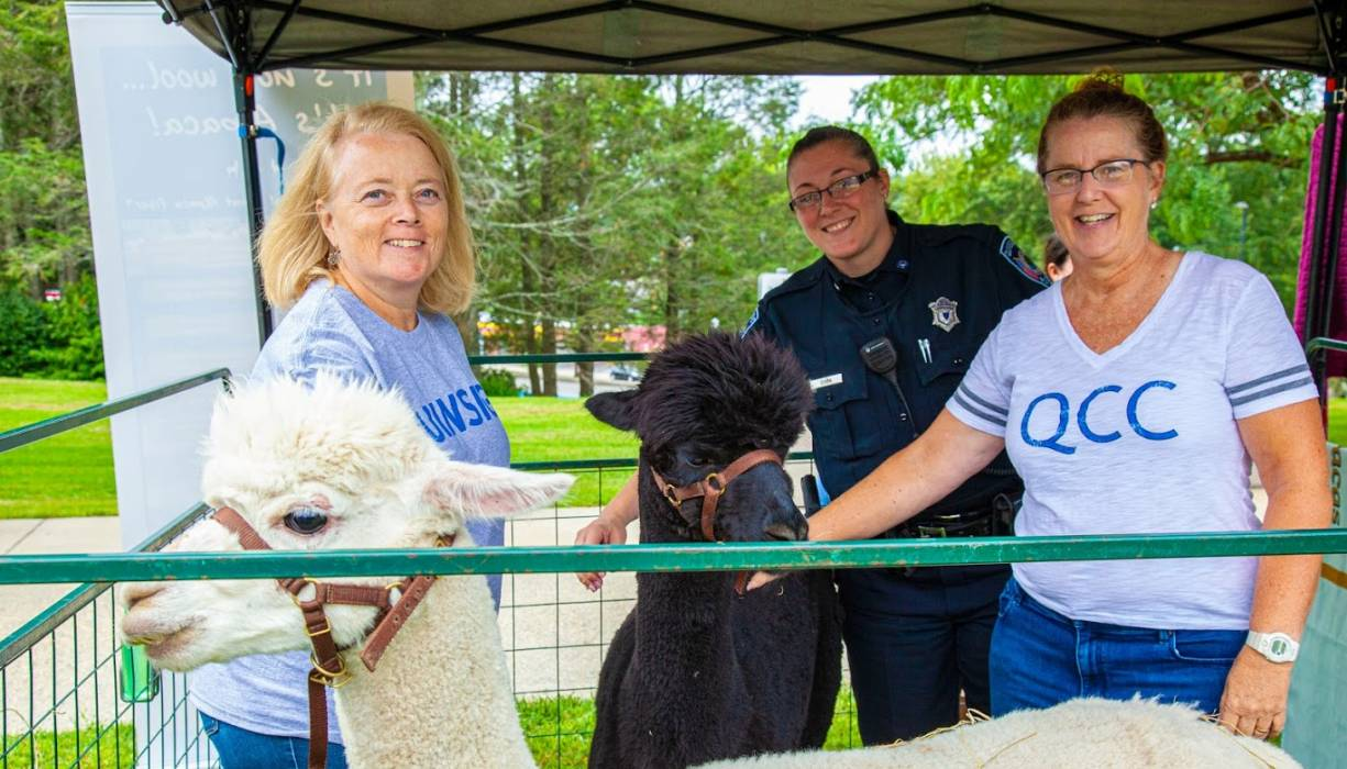 The alpacas once again visited QCC.