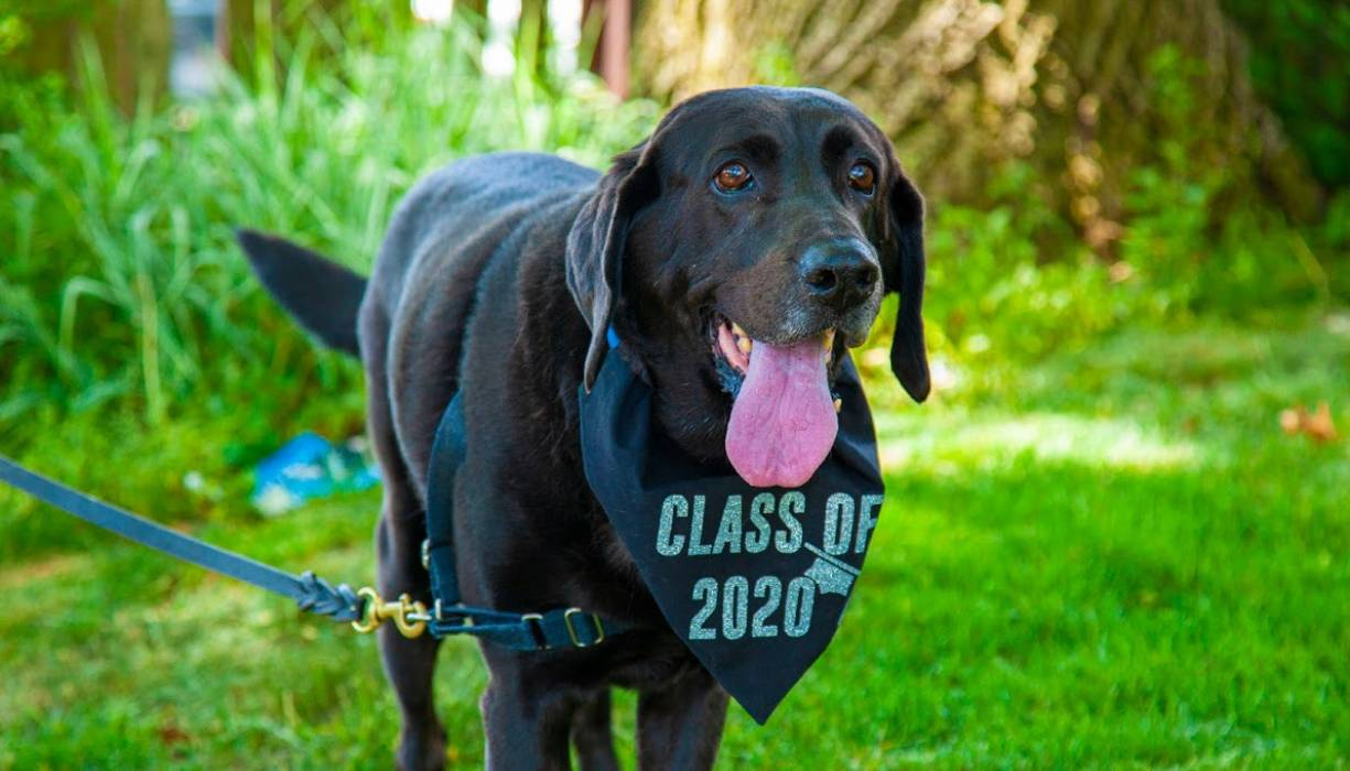 Gateway Counselor Jenna Glazer's rescue dog, Feeney, got in on the well wishes to graduates..