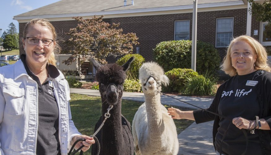 Director of Disability Services, Kristie Proctor (L) and Associate Director of Disability Services,Terry Rodriguez (R) help with the alpacas.