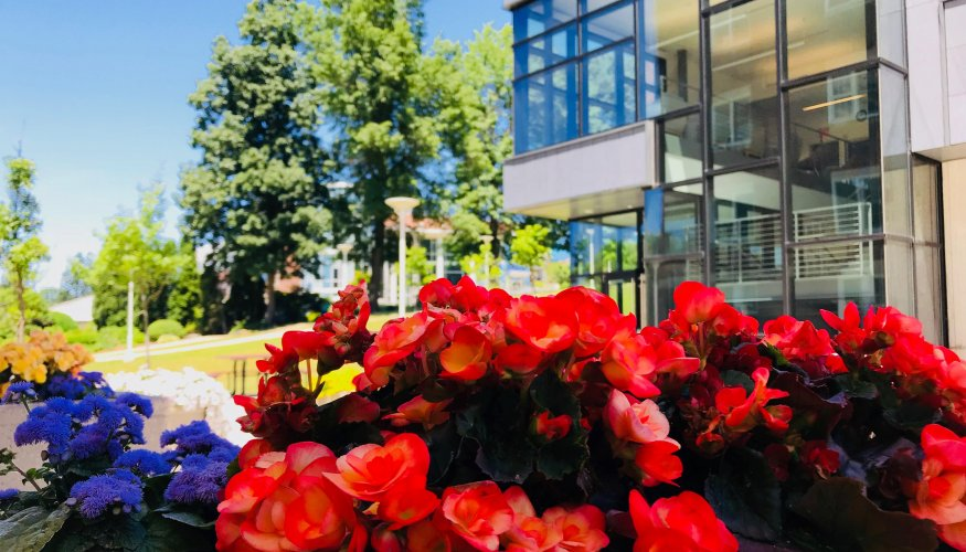 QCC's flowers exude the spirit of July 4th.