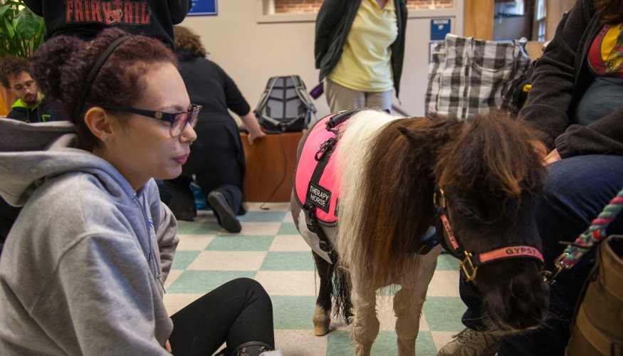 student pets pony at PAWS for People event