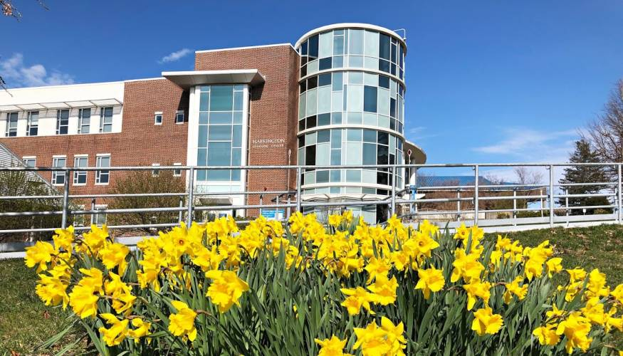 This April the daffodils on QCC's main campus didn't seem to get the message about social distancing.