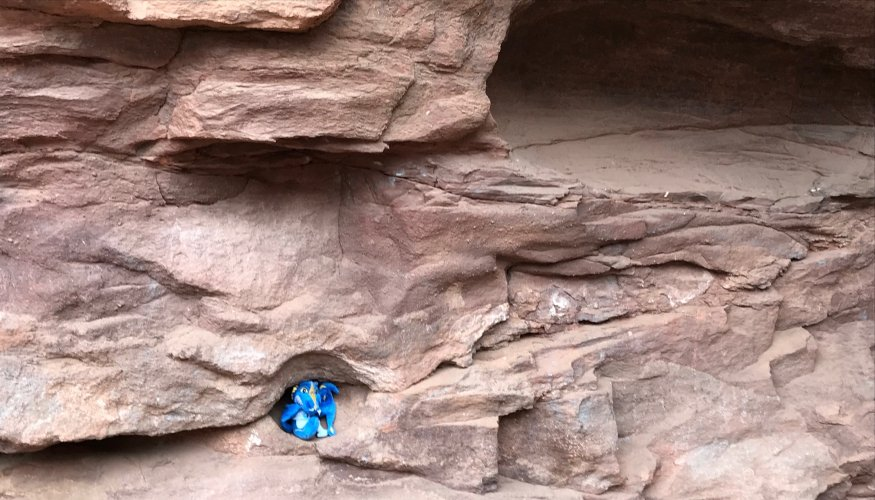 Scaling the walls of Red Rocks.