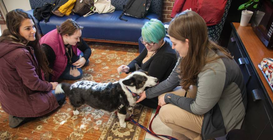 Students pet dog at PAWS for People