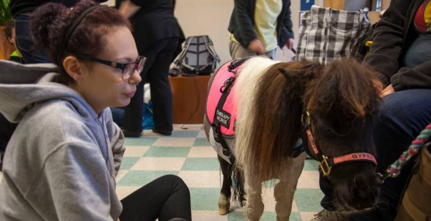 students pet pony to reduce stress